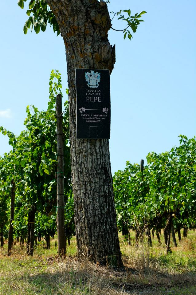 vineyard grape sign
